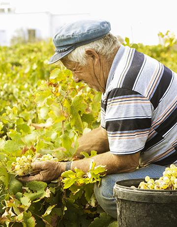 santorini-proposal-wine-package